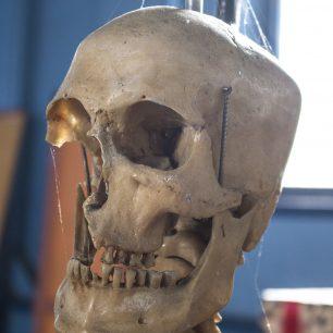 Anatomical Skeleton  | Taleyna Fletcher