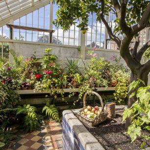 Peckover Orangery  | Taleyna Fletcher
