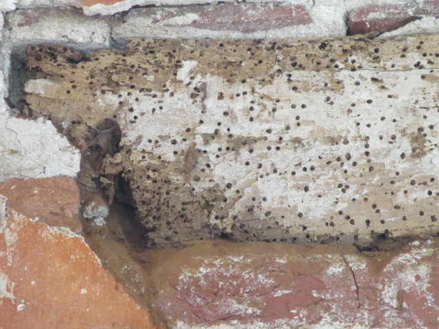 FREE TALK : Pest Identification, Monitoring and Trapping, Part 1 - Thursday 8th July - 6.30pm - 8.30pm | David Watt / Hutton+Rostron